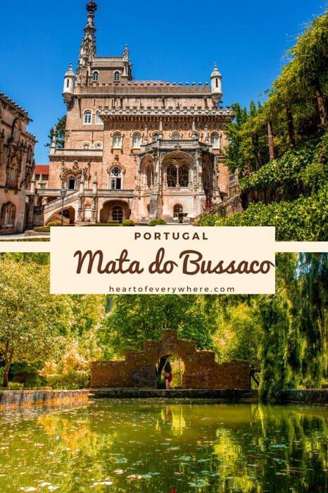 Mata do Bussaco - Uma jóia verde no coração de Portugal